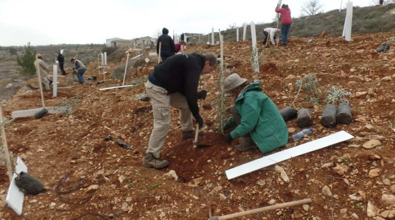 Olive Tree Planting Diary by Pat Arner